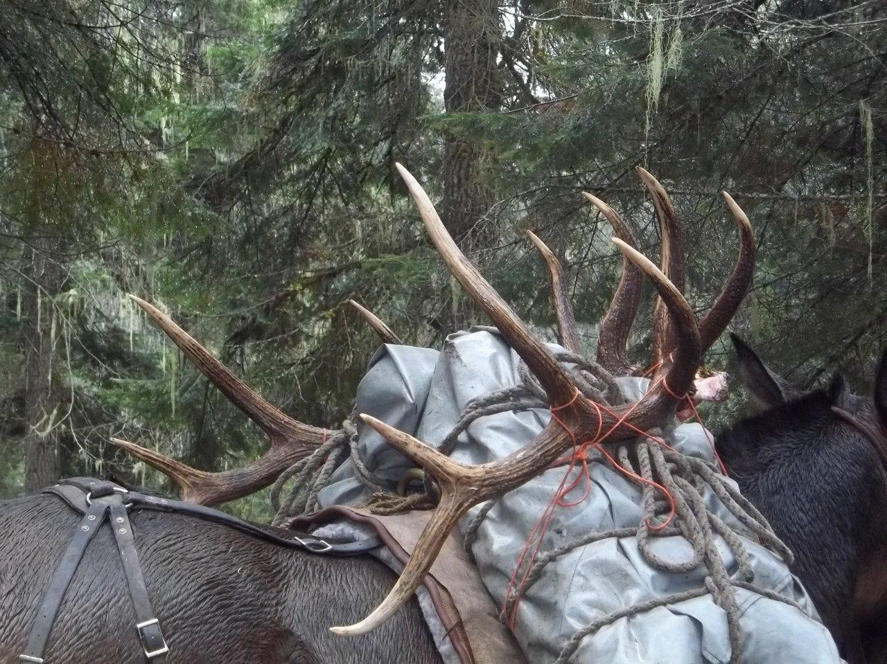 Elk-slide-on-horse566