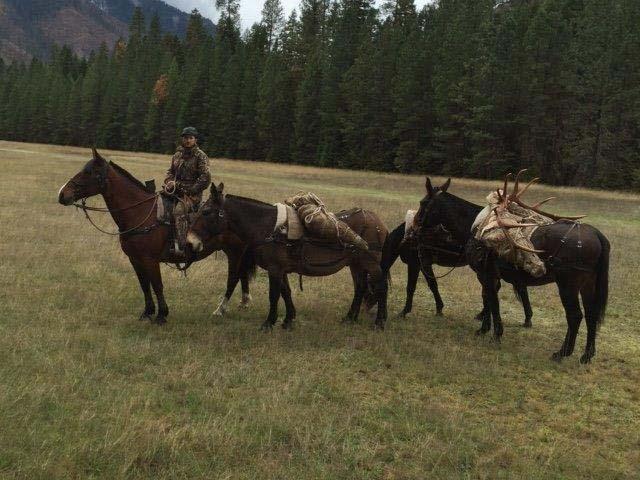 Elk-slide-pack-string